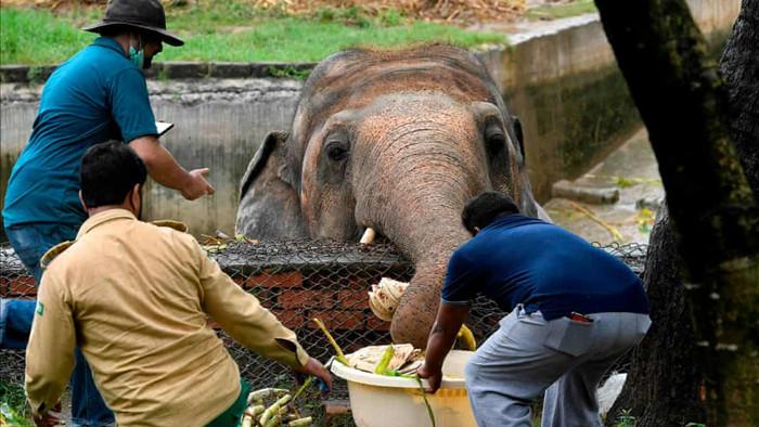 Chú voi cô độc nhất thế giới: Sau 35 năm sống mòn mỏi, nó sắp đón nhận niềm hạnh phúc tuyệt vời - Ảnh 1.
