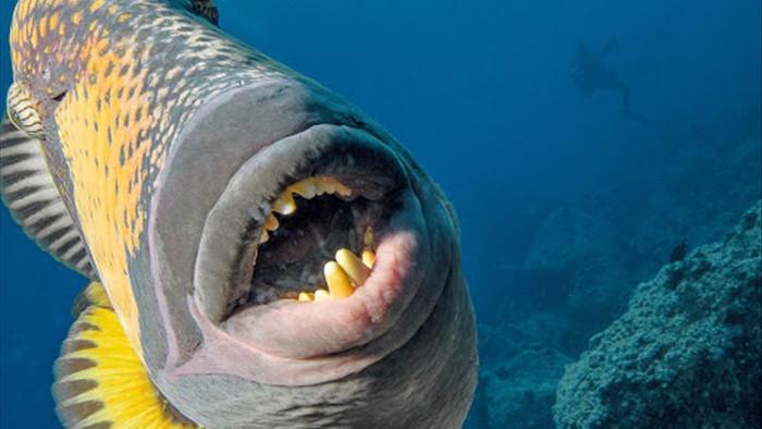 Đói ăn, cá sống dưới đại dương phải nhảy lên bờ để săn mồi - 1