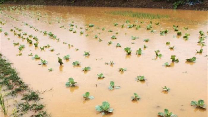 Mưa to ở Lào Cai gây ngập nặng, sạt lở hàng loạt tuyến đường - 7