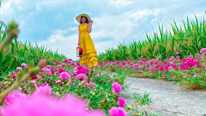 Hướng dẫn tới đường hoa mười giờ đẹp nhất Gò Công - 5