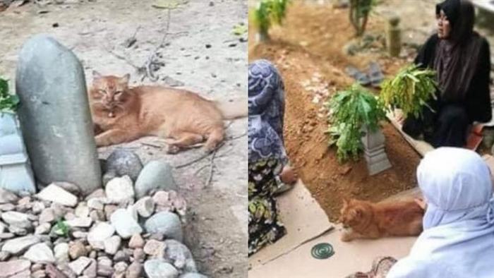 Cảm động chú mèo suốt hai năm, ngày nào cũng đến thăm mộ chủ - 1