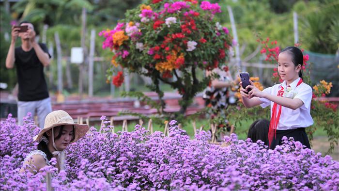 """Náo nức """"check in"""" vườn hoa thạch thảo tím """"lịm tim"""" ở Đà Nẵng - 4"""
