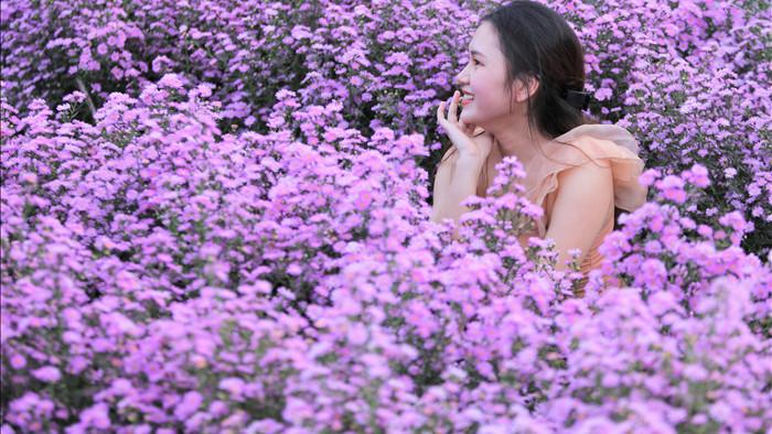 """Náo nức """"check in"""" vườn hoa thạch thảo tím """"lịm tim"""" ở Đà Nẵng - 2"""