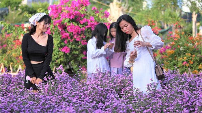 """Náo nức """"check in"""" vườn hoa thạch thảo tím """"lịm tim"""" ở Đà Nẵng - 3"""
