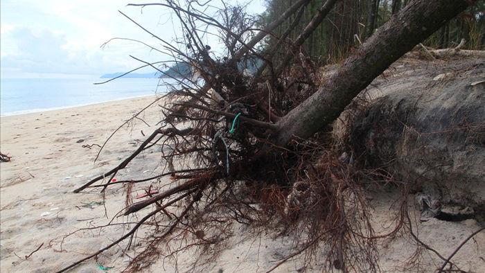 Bờ biển sạt lở nặng sau cơn bão số 5 - 2