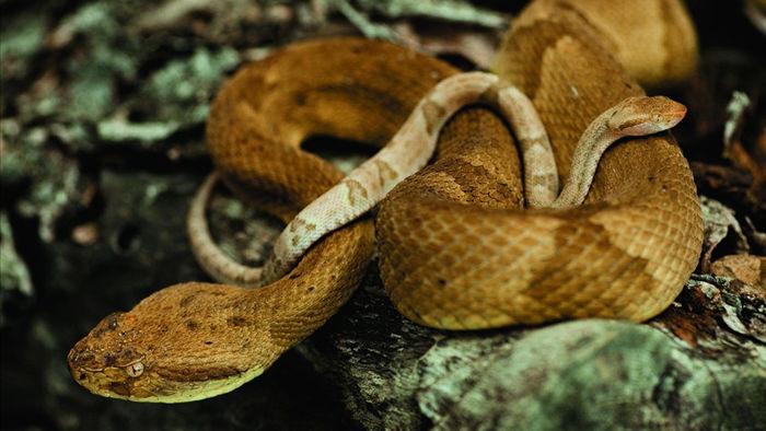 Hòn đảo có hàng nghìn con rắn bò lúc nhúc, được ví là nghĩa địa chết chóc - 1