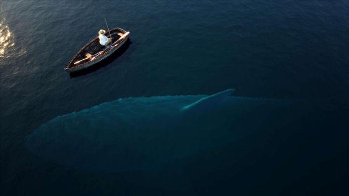 Megalodon là loài cá lớn nhất đại dương? - 1