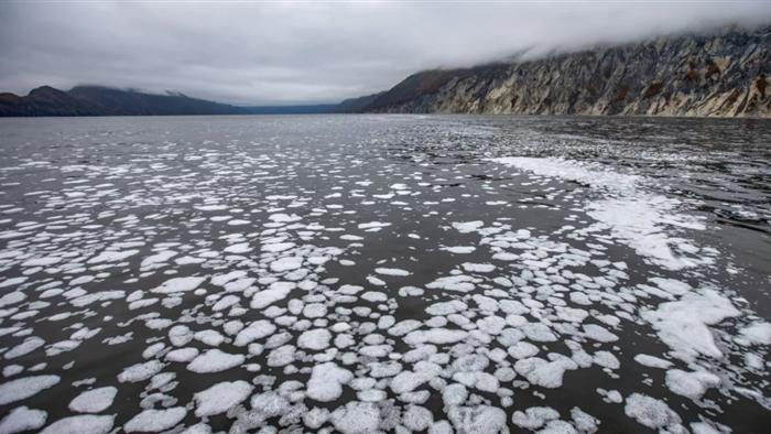 Hàng loạt sinh vật biển chết bí ẩn ngoài khơi bờ biển nước Nga - 1