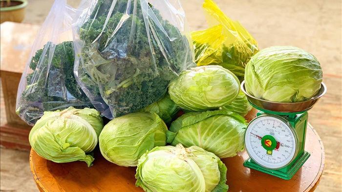 Đã mắt khu vườn 700m2 đủ loại rau củ quả sạch của gia đình ở Đắk Lắk - 4