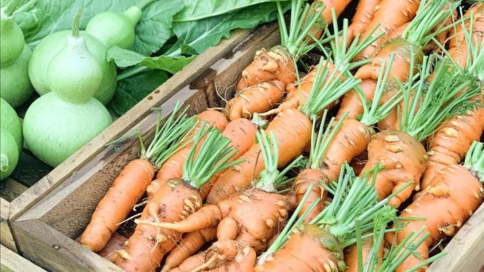 Đã mắt khu vườn 700m2 đủ loại rau củ quả sạch của gia đình ở Đắk Lắk - 5