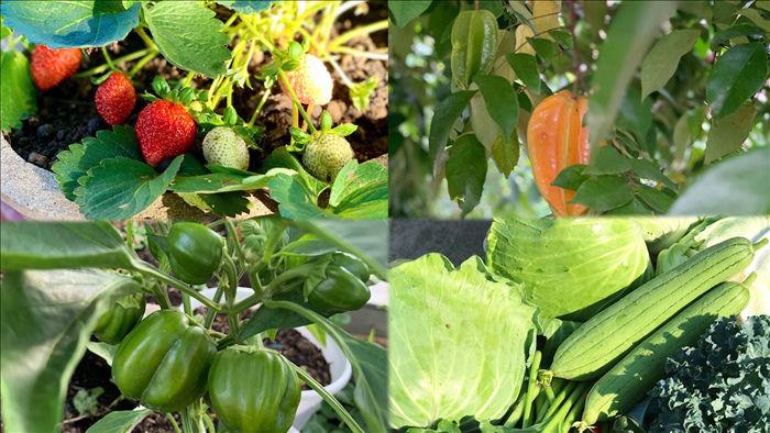 Đã mắt khu vườn 700m2 đủ loại rau củ quả sạch của gia đình ở Đắk Lắk - 12