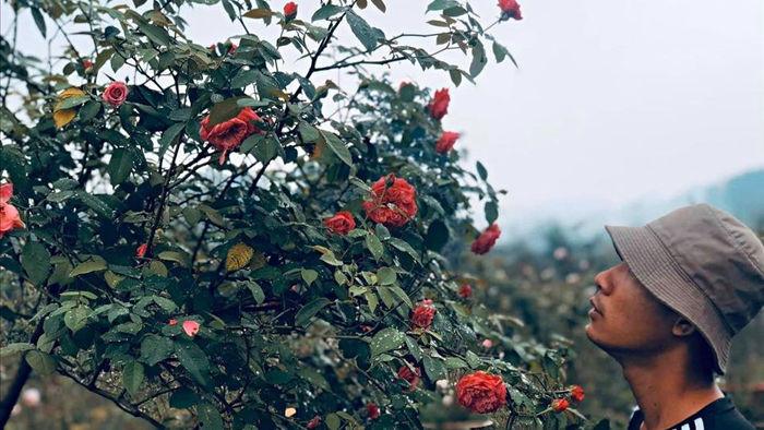 Cậu bé bóc mít thuê năm nào giờ là ông chủ vườn hồng đẹp như cổ tích - 1