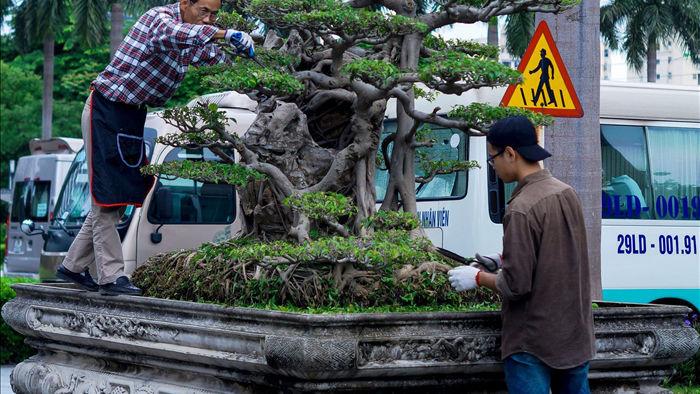 Mãn nhãn với cây sanh cổ song thân, đẹp từng centimet của đại gia Hà Nội - 2