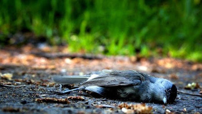 Kỳ lạ ngôi làng hút chim đến tự sát và chuyện bí ẩn chưa lời giải - 1