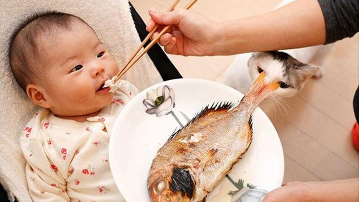 4 loại cá trẻ càng ăn càng tăng IQ, 5 loại ăn vào dễ hỏng não lại độc chết người - 1