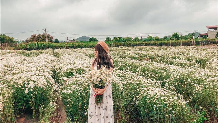 Ngẩn ngơ ngắm cánh đồng cúc họa mi giữa cao nguyên Mộc Châu - 17