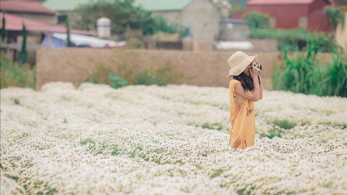 Ngẩn ngơ ngắm cánh đồng cúc họa mi giữa cao nguyên Mộc Châu - 14