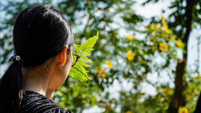Ngắm đồi hoa dã quỳ bung sắc nhuộm vàng đỉnh núi Ba Vì - 8