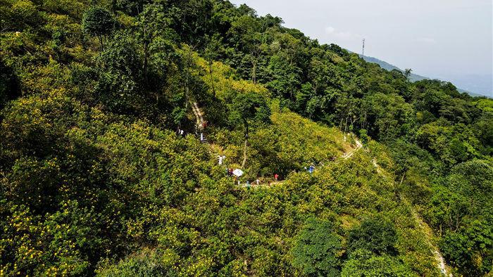 Ngắm đồi hoa dã quỳ bung sắc nhuộm vàng đỉnh núi Ba Vì - 9