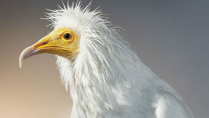 Chân dung các loài chim quý hiếm, tuy đơn giản nhưng lại tuyệt đẹp - Ảnh 13.
