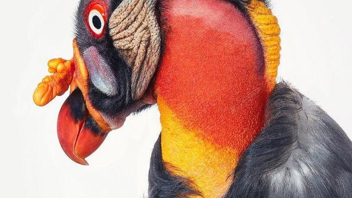 Chân dung các loài chim quý hiếm, tuy đơn giản nhưng lại tuyệt đẹp - Ảnh 19.