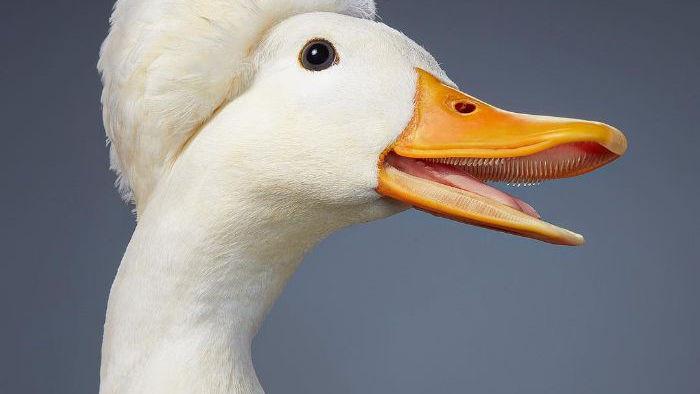 Chân dung các loài chim quý hiếm, tuy đơn giản nhưng lại tuyệt đẹp - Ảnh 24.