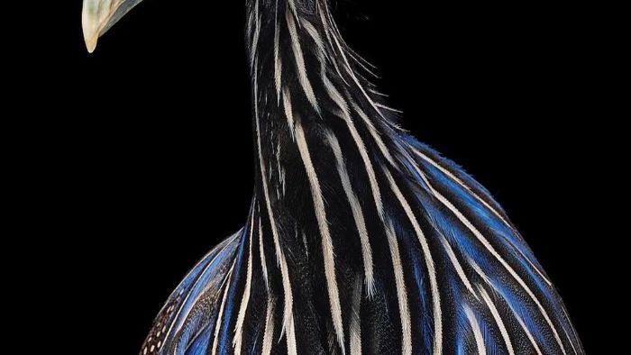 Chân dung các loài chim quý hiếm, tuy đơn giản nhưng lại tuyệt đẹp - Ảnh 20.