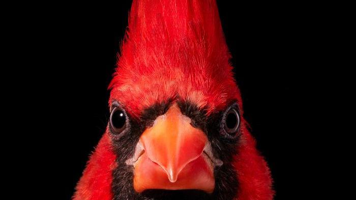Chân dung các loài chim quý hiếm, tuy đơn giản nhưng lại tuyệt đẹp - Ảnh 7.