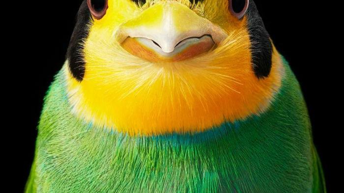 Chân dung các loài chim quý hiếm, tuy đơn giản nhưng lại tuyệt đẹp - Ảnh 11.