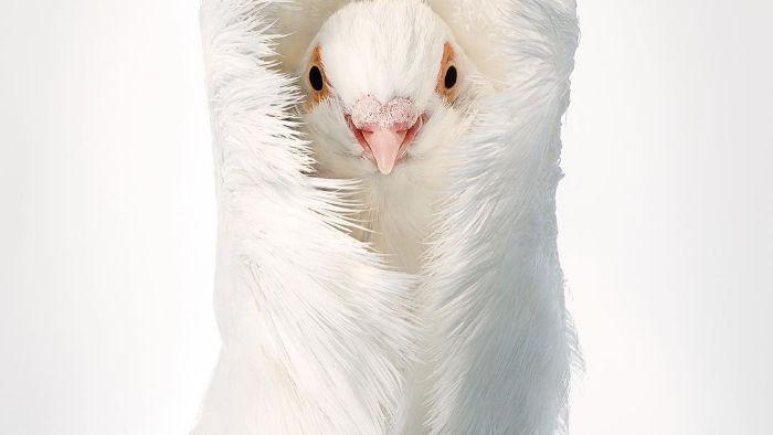 Chân dung các loài chim quý hiếm, tuy đơn giản nhưng lại tuyệt đẹp - Ảnh 8.