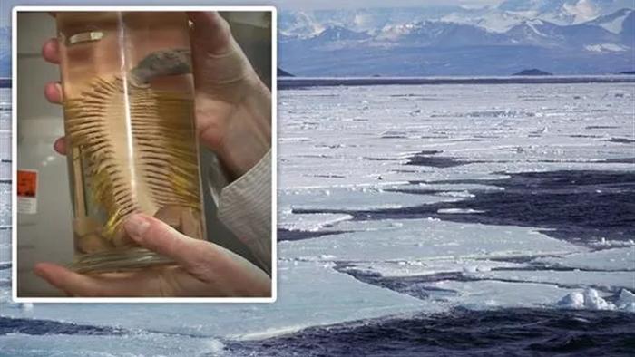 Tìm thấy loài sinh vật mới ở Nam Cực dưới lớp băng 1000 mét - 1