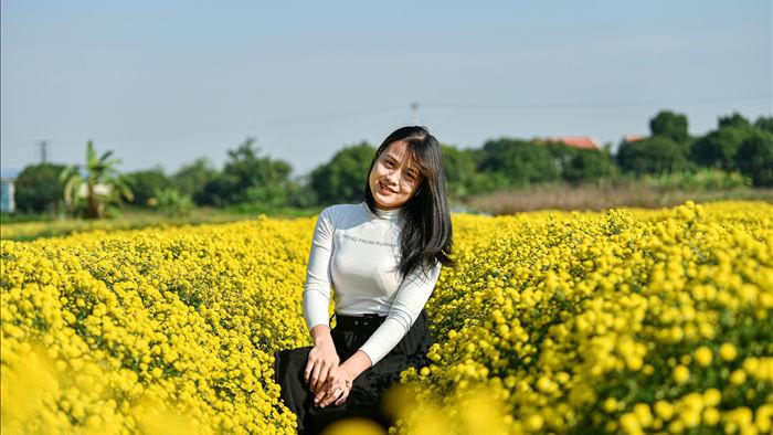 Hoa cúc tiến Vua Hưng Yên vào mùa vàng rực - 6