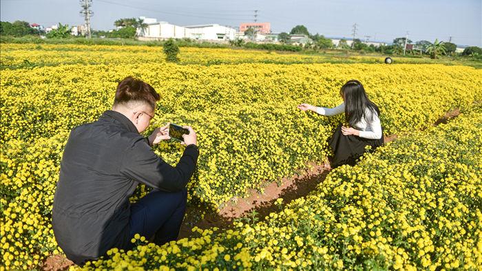 Hoa cúc tiến Vua Hưng Yên vào mùa vàng rực - 11