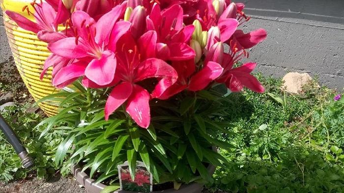 Bỏ 150 triệu buôn hoa Tết: 15 ngày 'xương máu', lỗ 50 triệu, gầy sụt 3kg
