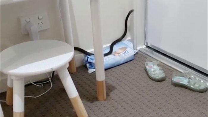 Hoảng hồn phát hiện rắn kịch độc trong phòng bé sơ sinh - 1