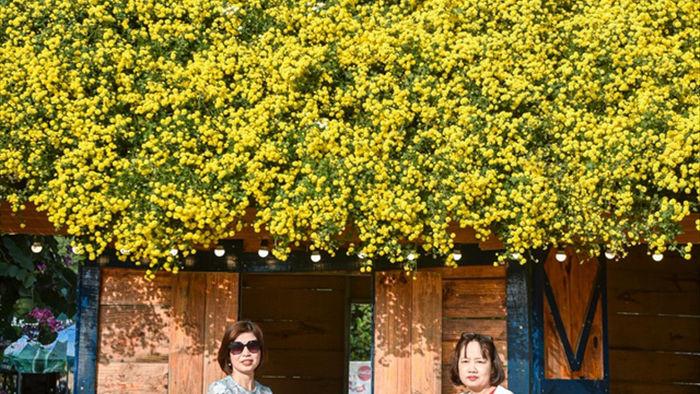Chiêm ngưỡng ngôi nhà cúc chi đẹp mê mẩn ở Hà Nội - 5