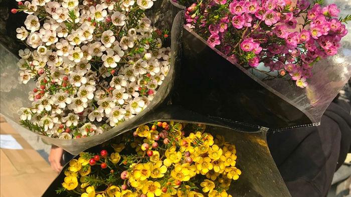 Hoa thanh liễu đang được rao bán đầy trên