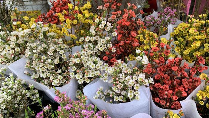 Hoa thanh liễu có nhiều màu như trắng, hồng, hồng tím, cam, xanh...