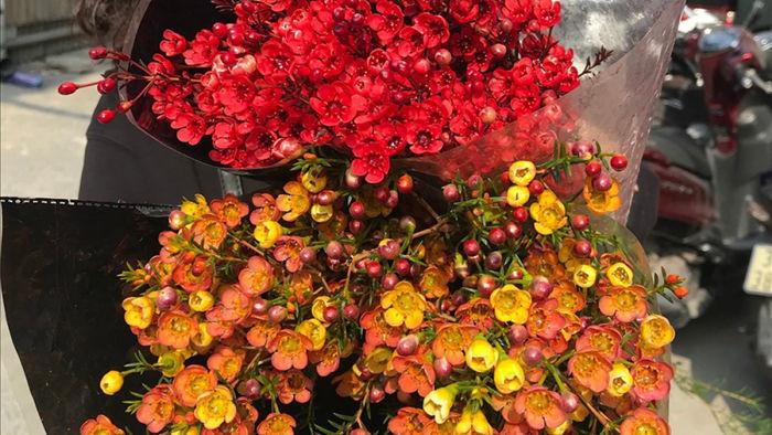 Mùa Giáng Sinh năm nay, nhiều chị em lựa chọn hoa thanh liễu để trang trí bởi giá đã