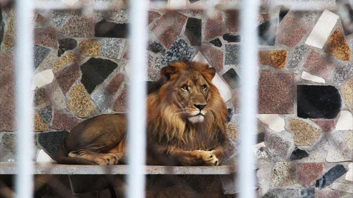 Những con vật co ro nép mình trong vườn bách thú Thủ Lệ vì lạnh - 2