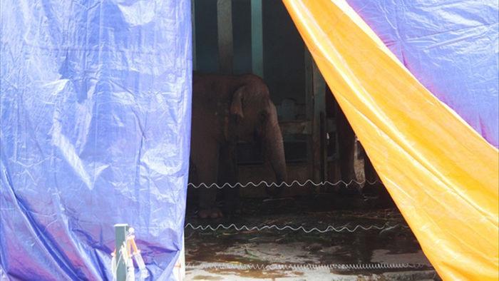 Những con vật co ro nép mình trong vườn bách thú Thủ Lệ vì lạnh - 4