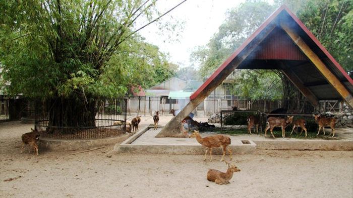 Những con vật co ro nép mình trong vườn bách thú Thủ Lệ vì lạnh - 5