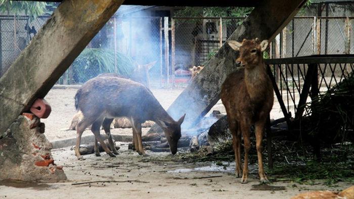 Những con vật co ro nép mình trong vườn bách thú Thủ Lệ vì lạnh - 7