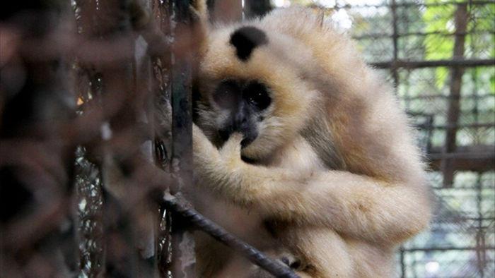 Những con vật co ro nép mình trong vườn bách thú Thủ Lệ vì lạnh - 8
