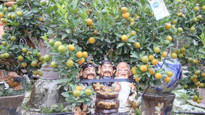 Chưa đến Tết Tân Sửu, quất bonsai trĩu quả đã đắt hàng - 10