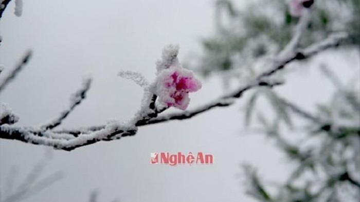 Rét tê buốt, dân mạng xuýt xoa chia sẻ lại ảnh tuyết rơi ở Nghệ An  - 4