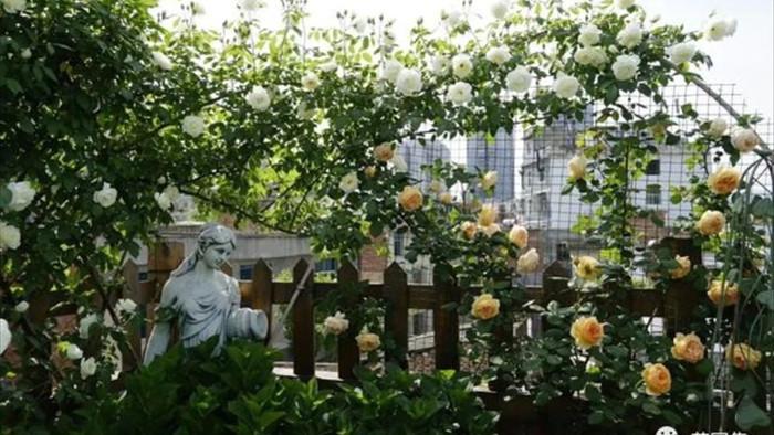 Trồng hoa trên sân thượng, cô gái tạo ra khu vườn cổ tích vạn người mê - 5