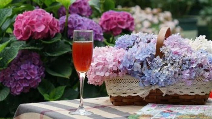 Trồng hoa trên sân thượng, cô gái tạo ra khu vườn cổ tích vạn người mê - 9