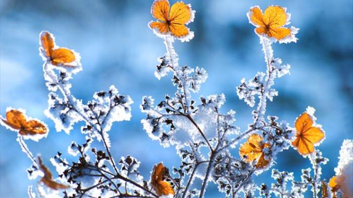 Tuyết đang rơi ở Lào Cai, bỏ túi ngay mẹo chụp ảnh 'sống ảo' với tuyết - 7