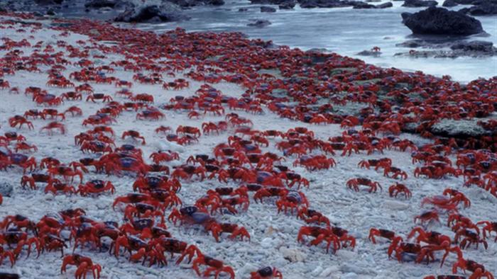 10 hòn đảo quái dị và bí ẩn trên khắp thế giới - 7